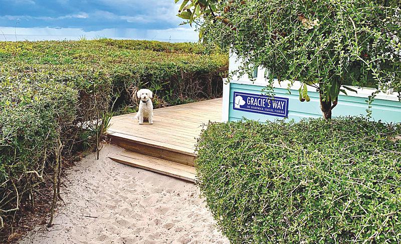 A Boardwalk Fur Every Pup