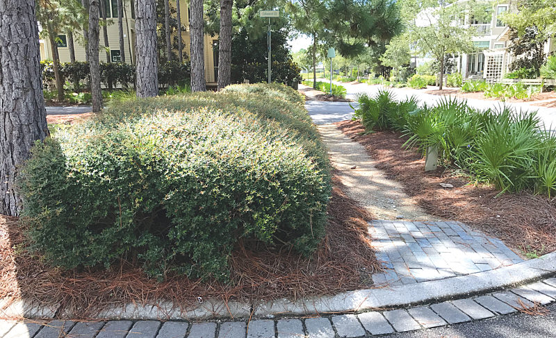 A Letter to the New Residents of South Walton