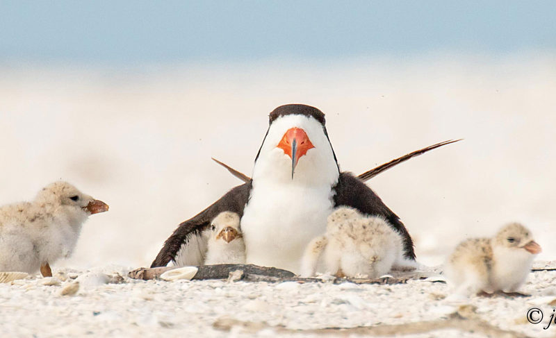 Bird Advocates
