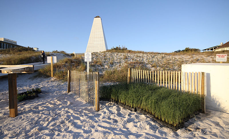 Seaside restores and re-nourishes coastal sand dunes