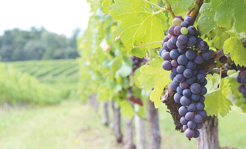 Take a Break from Pinot Noir, Drink Cru Beaujolais