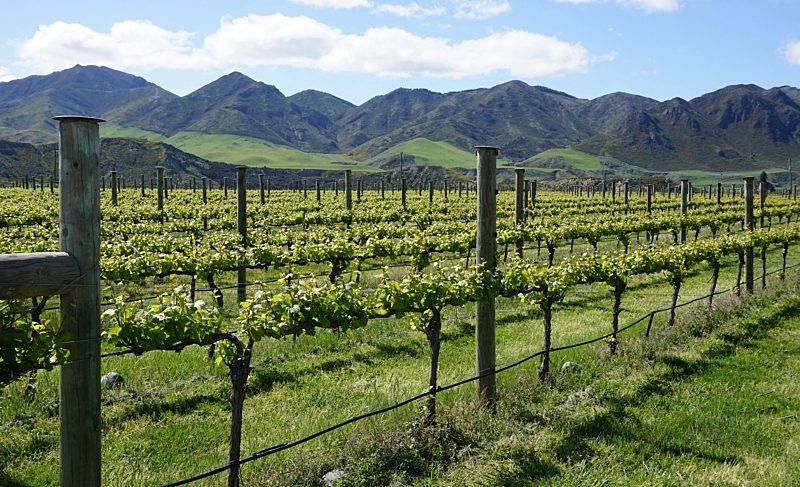 Taste the Wines of New Zealand